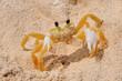 sand crab 3