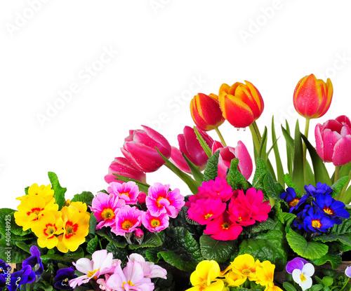 Frühling Garten Blumen Hintergrund