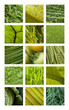 Texture, matière, fond, nature, jardin, vert, végétation