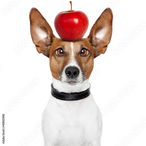 crazy dog with big lazy eyes and an apple on top