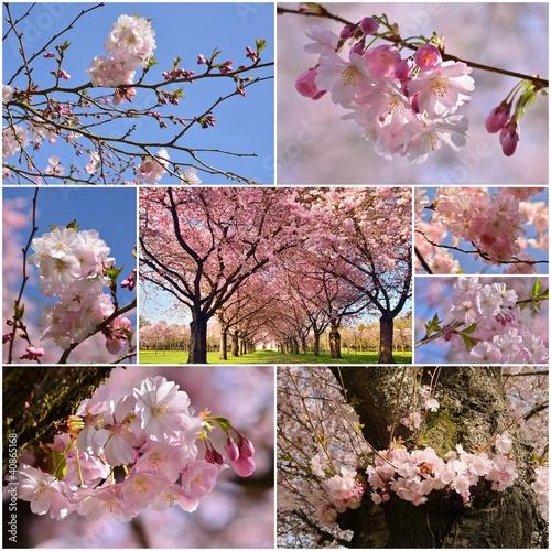 kolaz-ze-zdjeciami-wiosennych-kwiatow