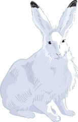 Rabbit Drawn2