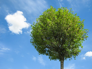 Fresh tree with blue sky