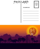Empty Blank Postcard Template Africa Sunset Motif
