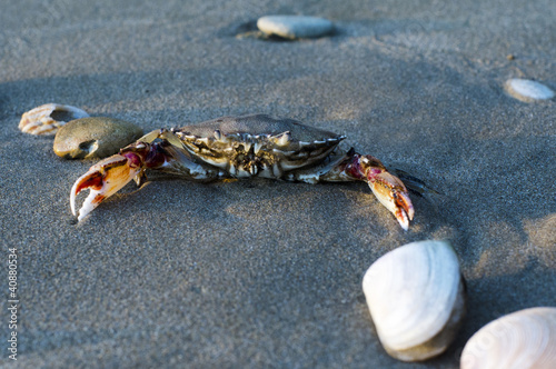 Wildlife and Animals - Crab
