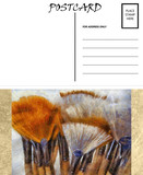 Empty Blank Postcard Template Artist Brushes Image