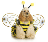 dog dressed like a bee