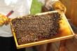 Bienenwaabe