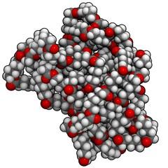 polycaprolactone molecule