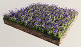 Fiori viola terreno sezione erba poster