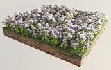 Fiori bianchi terreno sezione erba poster