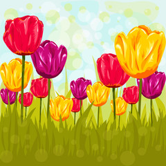 Flowers background with tulips