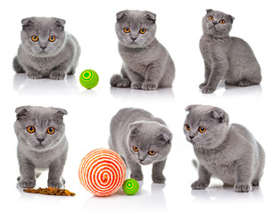 Collection of Little lop-eared kitten isolated on white