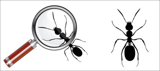fourmis, fourmis à la loupe, icones