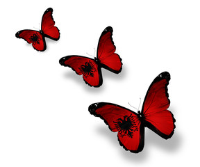 Three Albanian flag butterflies, isolated on white