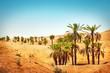 Fototapeten,landschaft,wüste,wüste,sahara