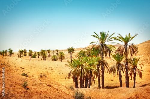 Fototapeten,landschaft,ocolus,ocolus,sahara