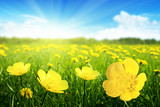 Fototapety Field of spring flowers