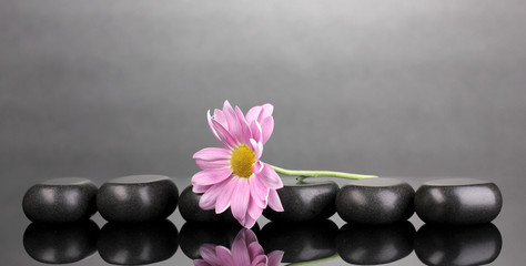 Spa stones and flower on grey background