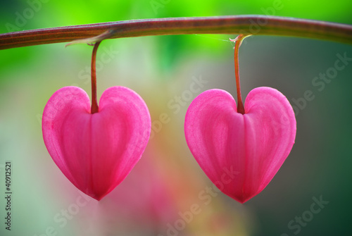 Two heart flower