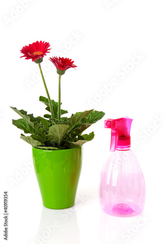 Pink water sprayer and Gerber flowers in pot