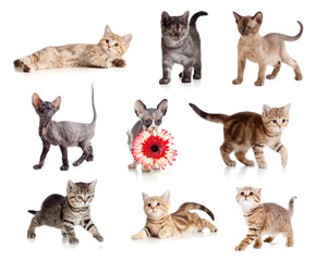 Funny kittens set isolated on white