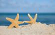 two sea star starfish on beach, blue sea and beach sand, shallow
