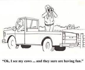 See cows