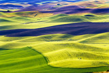 Green Fields Black Land Patterns Palouse Washington - 40934199