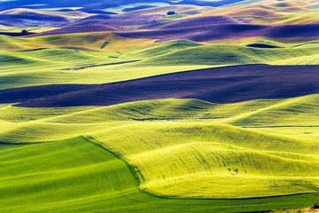 Green Fields Black Land Patterns Palouse Washington