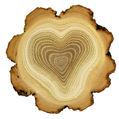 Heart of tree - growth rings of acacia tree