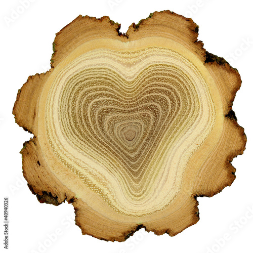 Heart of tree - growth rings of acacia tree