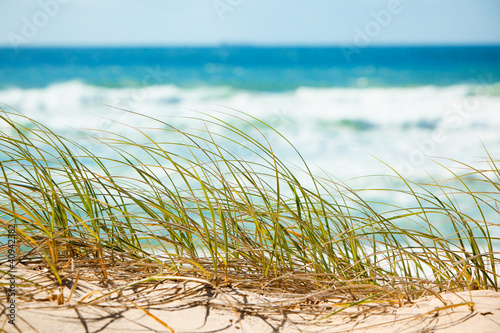 Green grass on sandy dune overlooking beach