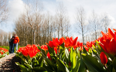 Couple against Hollandse Tulips