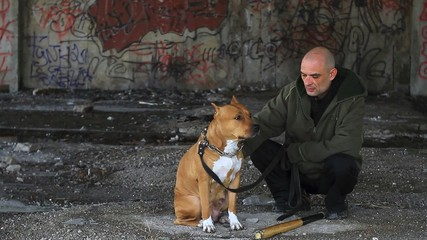 Pit bull looking at its criminal owner