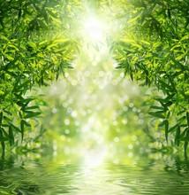 Zen las bambusowy, słońce i woda.