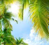 Fototapete Palms - Abkühlung - Tag