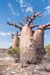 Baobab forest and savanna