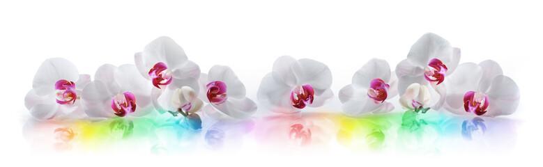 Orchideen 3