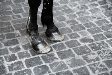 horse legs detail on cobblestone