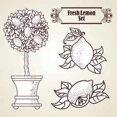 Lemon set in retro style