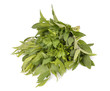 Collection of fresh herbs on the white background