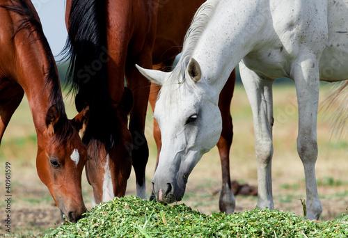 Fototapeten,tier,pferd,wild animals,herde