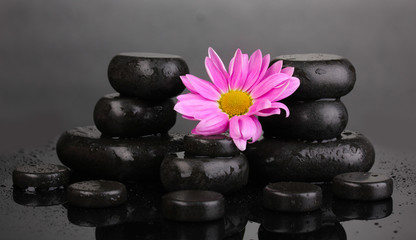 Spa stones and flower with water drops on grey background