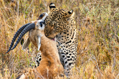leopard catches its prey