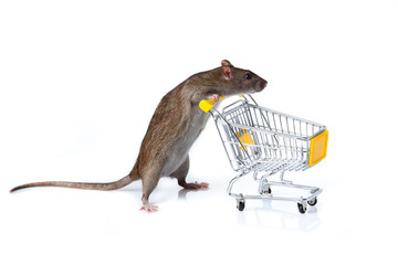 rat and the shopping cart. a rat with a basket