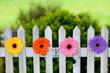 Blumen am Gartenzaun