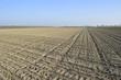 Agricoltura in campo