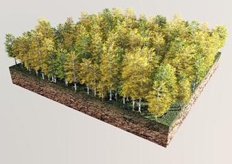 Alberi autunno sezione terreno