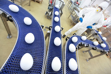 egg production line in gmo factory